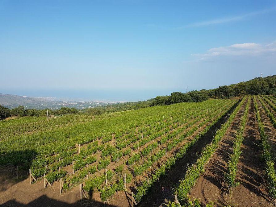 Tutustuminen Gambinon viinitilaan oli hieno kokemus.