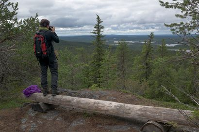 Pohjois-Suomessa maksettiin 1,2 miljoonaa euroa metsien määräaikaisesta suojelusta