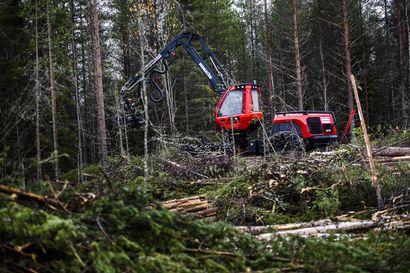 Kestävään metsätalouteen ei kuulu joko-tai