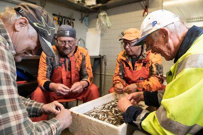 Tyräjärven kunnostukselle heti kolme vuotta lisää – liki sadan tuhannen euron avustus takaa tärkeän työn jatkumisen