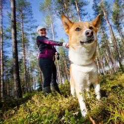 """Haukiputaalle avataan kesällä metsäalue, jossa koirat voivat temmeltää vapaasti – """"Tälläkin hetkellä moni koira on laittomasti irti"""""""