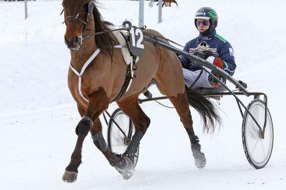 Jonny Länsimäen hevosten kaksoisvoitto päätti Skellefteån ravi-illan