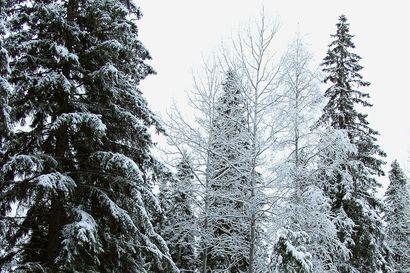 Maanomistajien vapaaehtoiset tarjoukset ovat tuoneet Pohjois-Pohjanmaalle viiden Rokuan kansallispuiston verran uutta suojeltua metsää
