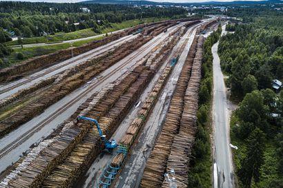 Rovaniemen keskustan tuntumaan on säilöttynä jopa seitsemän eduskuntatalon verran puuta –Aluksi terminaalissa haittasi melu, nyt ärsyttävät pinoista nousevat tuhohyönteiset