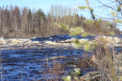 Korona pysäyttää Ruotsin Matkakosken kalastusluvat – vain kyläläiset saavat kalastaa