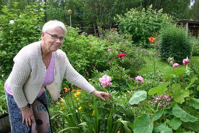 Rehevä puutarha pohjoisessa – Kaikki lähti yhdestä äitienpäiväruususta