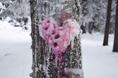 Talvinen taidepolku tarjoaa tekemistä lomalaisille – Oulunsalon Varjakan taidepolut ovat houkutelleet jo satoja kävijöitä