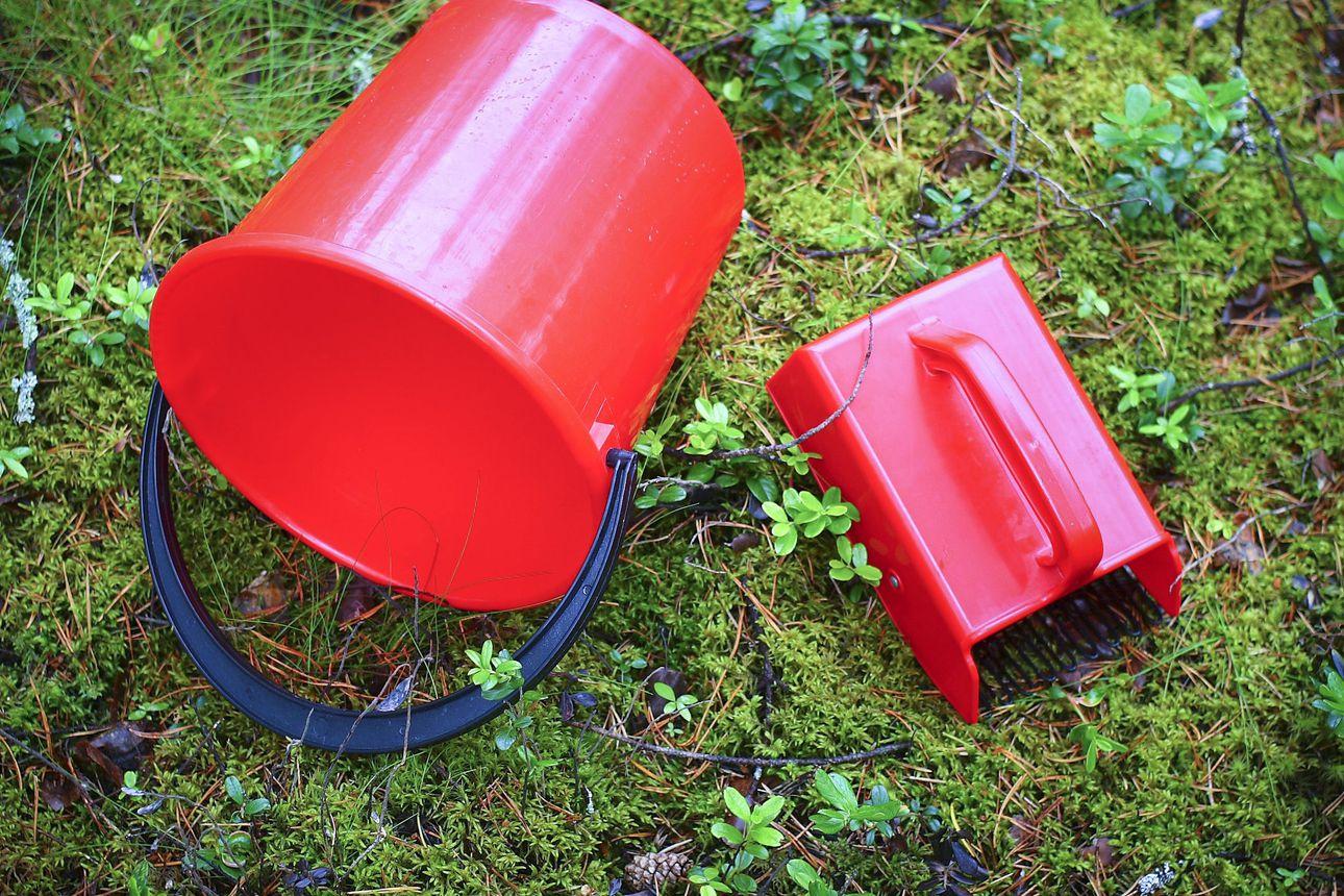 Pohjois-Ruotsissa kadonnut iäkäs marjanpoimija löytyi kuolleena vuorokausien maastoetsintöjen jälkeen