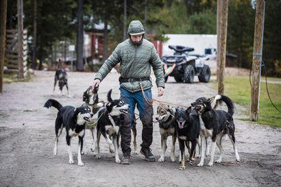 Toiveissa parempi koiranelämä –matkailun valjakkoyritykset halutaan mukaan yhtenäiseen laadunvalvontaan