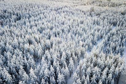 Metsähallitus saavutti tavoitteensa viime vuonna –Luonnon virkistyskäyttö ja eräilyn suosio kasvoivat
