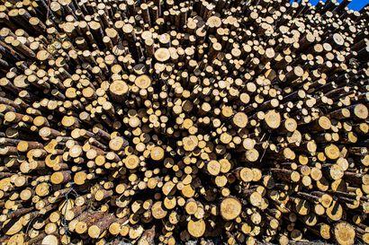 "MHY:n Kilpivaara: ""Puukauppa on ollut vilkasta koko kesän"""