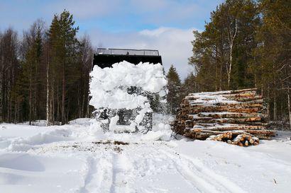 Puunkuljetuksissa poikkeuskevät: Ensin aurataan – sitten aurattu lumi laitetaan takaisin talviteille