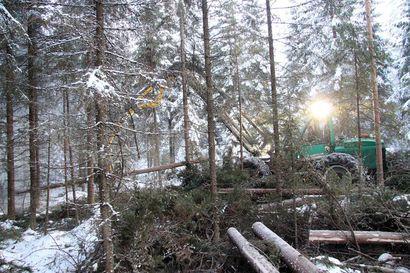 Metsäkeskuksien palvelupisteissä muutosta: Vihannista siirto Haapavedelle, Oulaisissa säilyy ennallaan