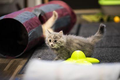 Kissojen leikkauttamista ja tunnistusmerkintöjä vaativa kansalaisaloite etenee eduskuntaan