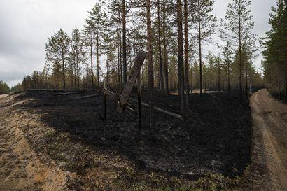 """Metsiä vakuutetaan edelleen vähän, vaikka tuhojen määrät kasvavat – """"Vaikka joka vuosi metsää palaa muutamia satoja hehtaareja, joillekin metsänomistajille se tuntuu jotenkin kaukaiselta"""""""