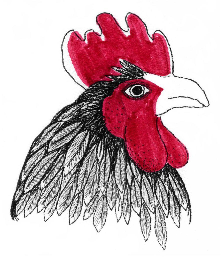 Kana oppii nopeasti ja muistaa opitun ikuisesti. Mutta jos tilanne muuttuu, se muuttaa käytöstään saman tien. Ehkä siksi ihmiset kuvittelevat, ettei kana muista asioita.
