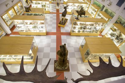 Ensi vuonna Tietomaassa pääsee tutkimaan luontoa eläimen silmin – 600 000 euron interaktiiviseen näyttelyyn otetaan suljetun Oulun eläinmuseon eläimiä
