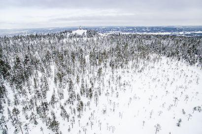 Kaupunginjohtaja esittää etuosto-oikeuden käyttämistä Ounasvaaran metsätilaan, kaupunginhallitus päättää asiasta maanantaina