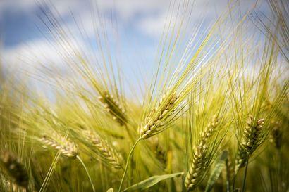 Tutkimus: maatalouden päästöjä voidaan vähentää yli kolmanneksella 2050 mennessä – kasvihuonepäästöistä 60 prosenttia tulee turvemailta