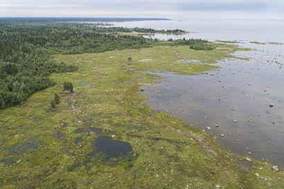 Siikajoen rantaniityillä ajeltu luvattomasti – Metsähallitus tehnyt poliisille tutkintapyynnön