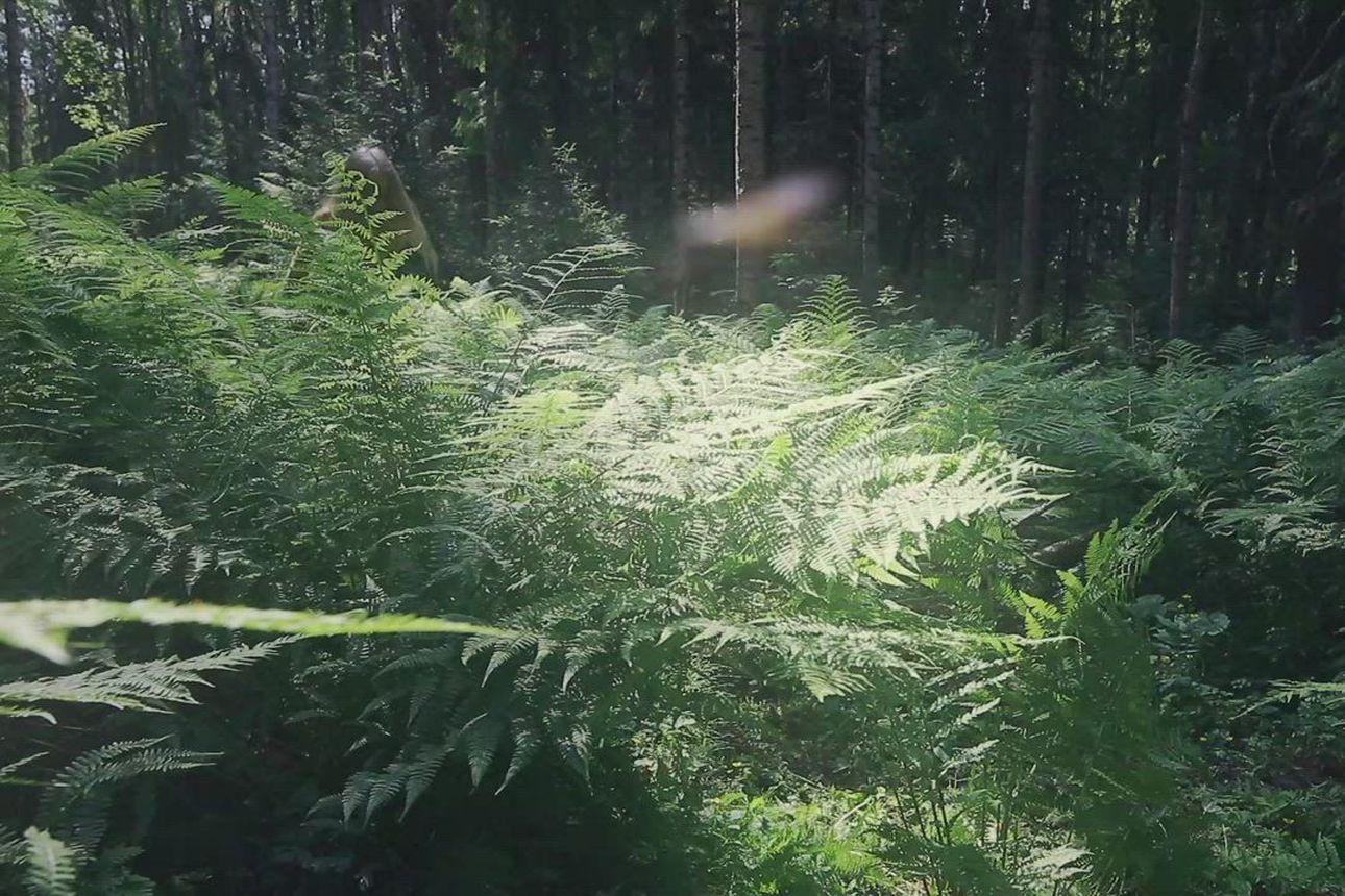 Katso lyhytdokumentti Pyyn metsä