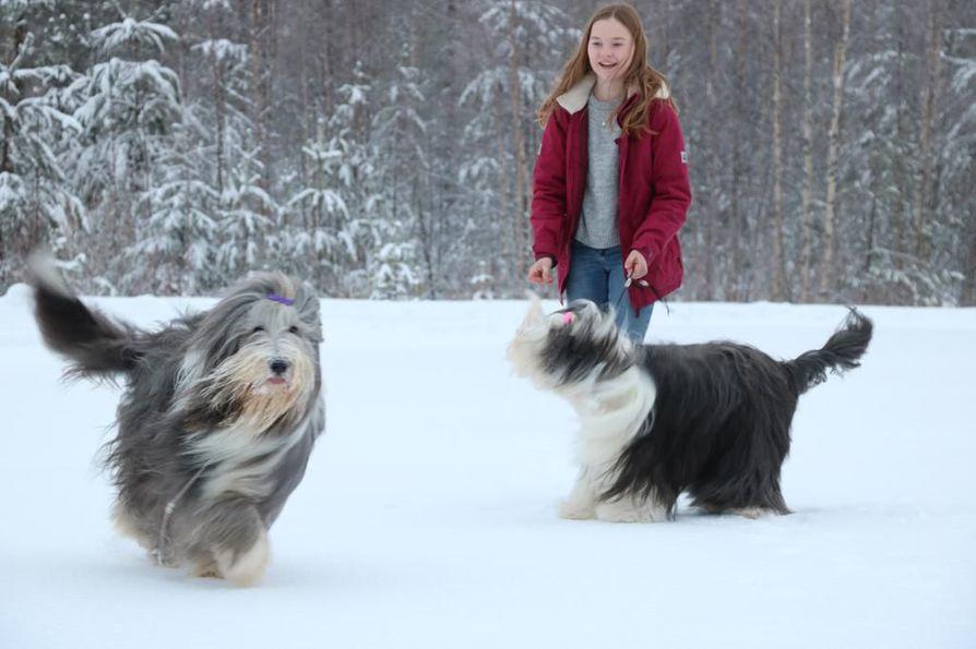 Linnea Pietarila on löytänyt yhteisen sävelen partacollie-koirien kanssa.  Koirankäsittelytaidot ja lajituntemus toivat hänelle 3676677505