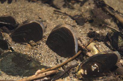 Raakun 100 miljoonan vuoden taival uhanalaiseksi eläinlajiksi – näyttelyavajaiset torstaina Syötteellä ja Oulangalla