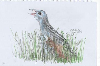 Viikon luontoääni: Rääkkä muuttui Leinon runossa linnuksi