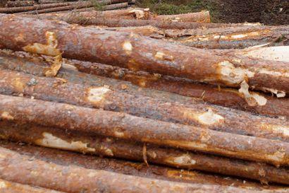 Kiinnostus Lapin metsiä kohtaan kasvaa edelleen. Moni metsämaan ostaja arvostaa puun myynnistä saatavaa tasaista tuottoa.