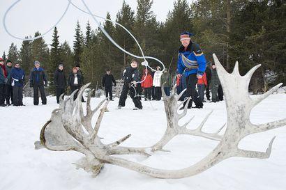 SVT: Paikalliset vetivät hukkuvan hirven suopungilla kuiville Pohjois-Ruotsin Jokkmokissa
