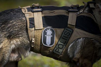 Mies ajoi Haapavedellä ulos tieltä ja poistui jostain syystä metsään – poliisikoira löysi tunteja kadoksissa olleen yöllä