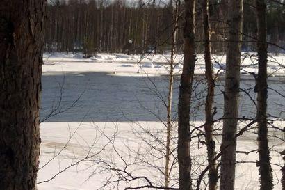 Joutsenet ovat palanneet Koillismaalle! Katso video Hossasta ja kuule veden solina– lähetä myös Koillissanomiin kuvia kevään tulosta