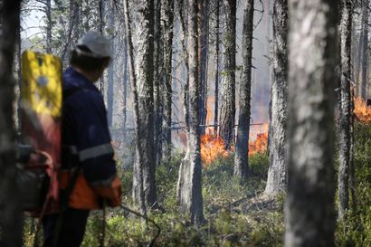 Simossa kulotetaan vanhojen metsien suojeluohjelmaan kuuluvaa metsää metsäpalovaroituksesta huolimatta