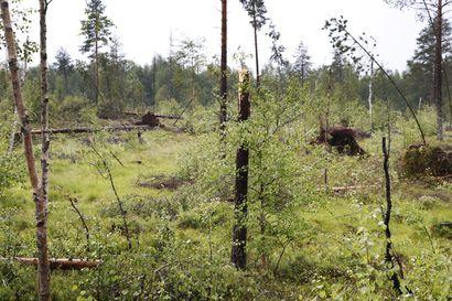 Pudasjärvi vaatii myös myrskytuhokorvauksia metsänomistajille – Kuusamon kanssa yhteisesitys ministeriöön