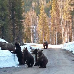 """Anne kohtasi kuusi karhua kerralla Kuusamossa – sai vangittua tilanteen valokuvaan: """"Katselimme niiden menoa, melkoinen tuhina sieltä kuului"""""""