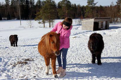 Ruukkilaisen Emmi Yrjänän verkkokauppa syntyi rakkaudesta poneihin – Ponionni on ainoa lajissaan koko Suomessa