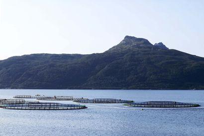 Lohivirus leviää Pohjois-Norjan kalankasvattamoissa – Suomessakin syytä olla valppaana