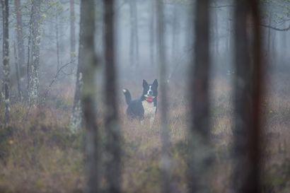 Lisää nuoria metsästäjiä tarvitaan