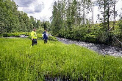 Tervolan Runkausjoki aiotaan palauttaa vaelluskalojen lisääntymisalueeksi – alla on vain kaksi voimalaitosta ennen merta