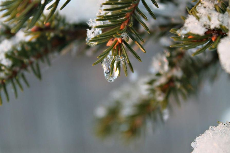 Erityisesti keväät ovat lämmenneet Lapissa.