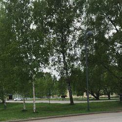Lukijan video: Hirvi juoksee Oulun kasarmialueella