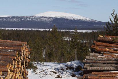 Lumi vyöryi jälleen Pallaksella– alueella liikkuneet lumilautailijat selvisivät ilman vahinkoja