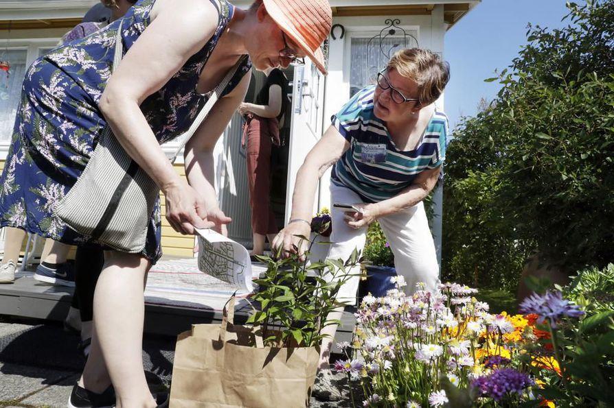 Tuposlainen Virpi Karhula vieraili oululaisen Lea Dahlströmin siirtolapuutarhassa ja sai mukaansa kukkapistokkaan.