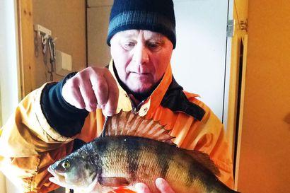 Vuoden ensimmäinen kala kalakisaan – reilu 1.800 gramman ahven