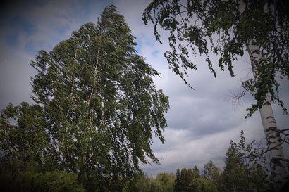 """Suomen yli liikkuva """"otus"""" aiheuttaa tänään voimakkaita myrskypuuskia, tuuli puhaltaa rajusti pohjoisessakin – vaikuttaa lauttaliikenteeseen"""