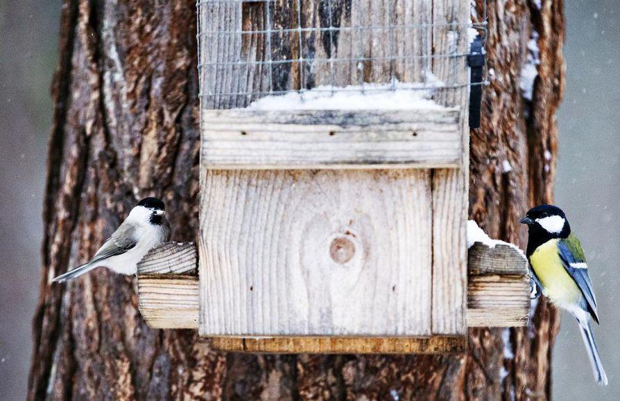 Maassa oleva ruoka likaantuu lintujen ulosteisiin ja houkuttelee paikalle rottia. Siksi ruoka on tärkeää laittaa laudalle.