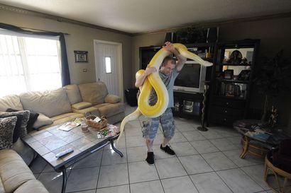 """Jättiläismäiset pytonkäärmeet saivat metsästäjät peräänsä Floridassa – """"Tiesin, että se yritti mennä kohti kurkkuani"""""""