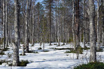 Metsien tuhkalannoitus lausunnolle