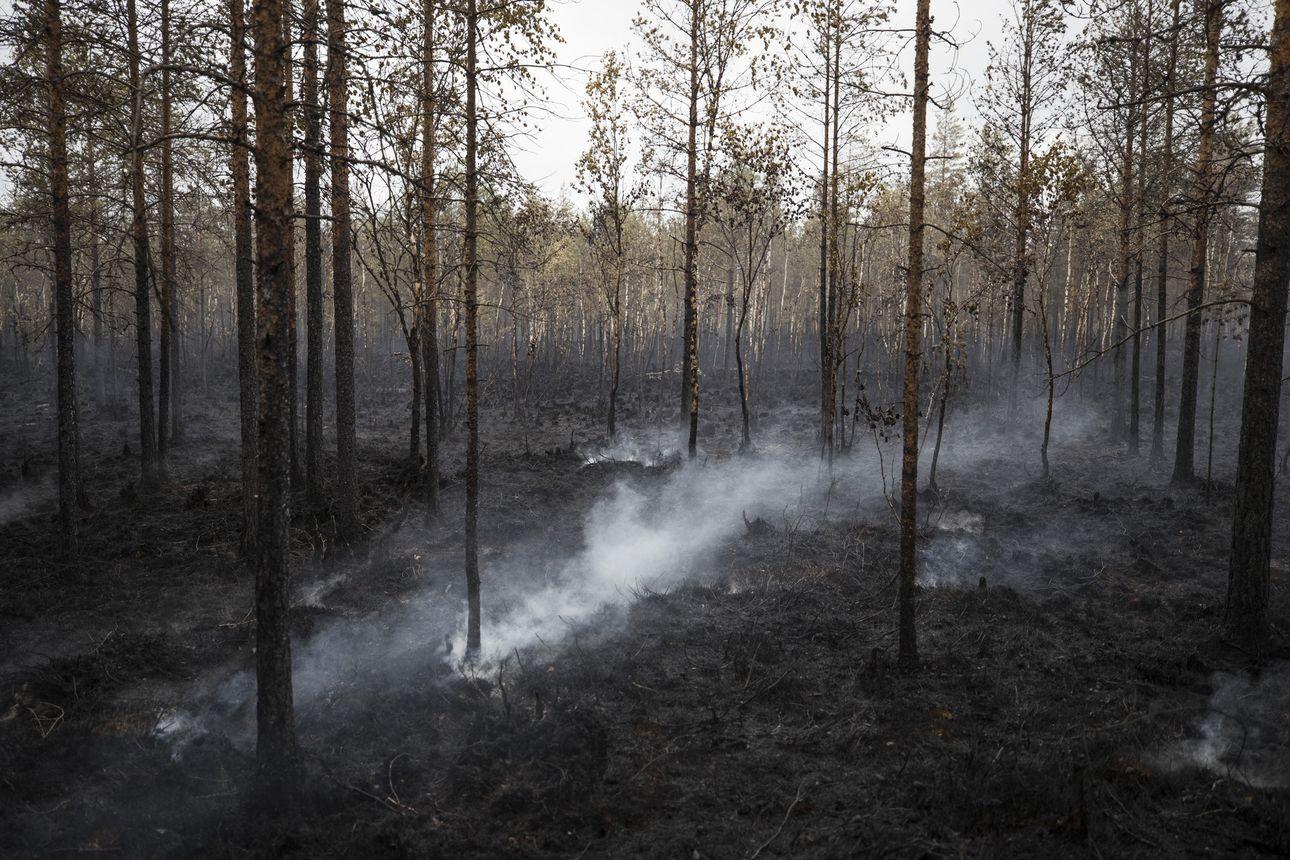 Muhoksen valtavaa metsäpaloa sammutetaan yli viikonlopun – syttymissyystä ei edelleenkään tietoa