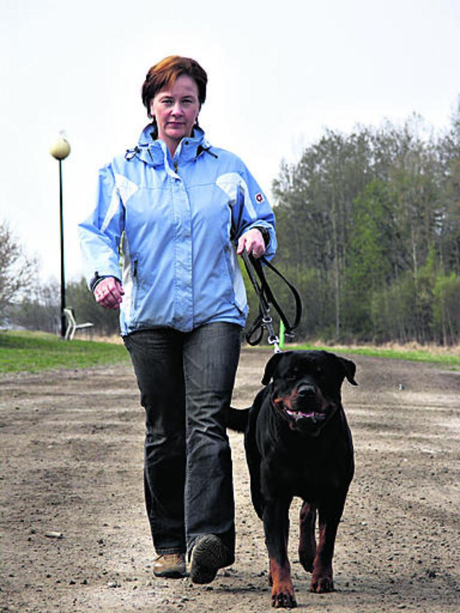 """Remu jää kotiin, kun Sari Maaninen juoksee ensi viikon lauantaina Oulun Terwamaratonin. """"Laskujen mukaan lenkki pitäisi mennä noin neljään tuntiin ja varttiin. Pääasia on kuitenkin, että pääsen maaliin"""", Maaninen suunnittelee."""